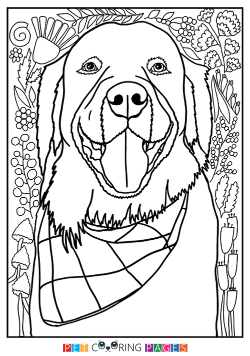 500x711 Golden Retriever Coloring Page Booker