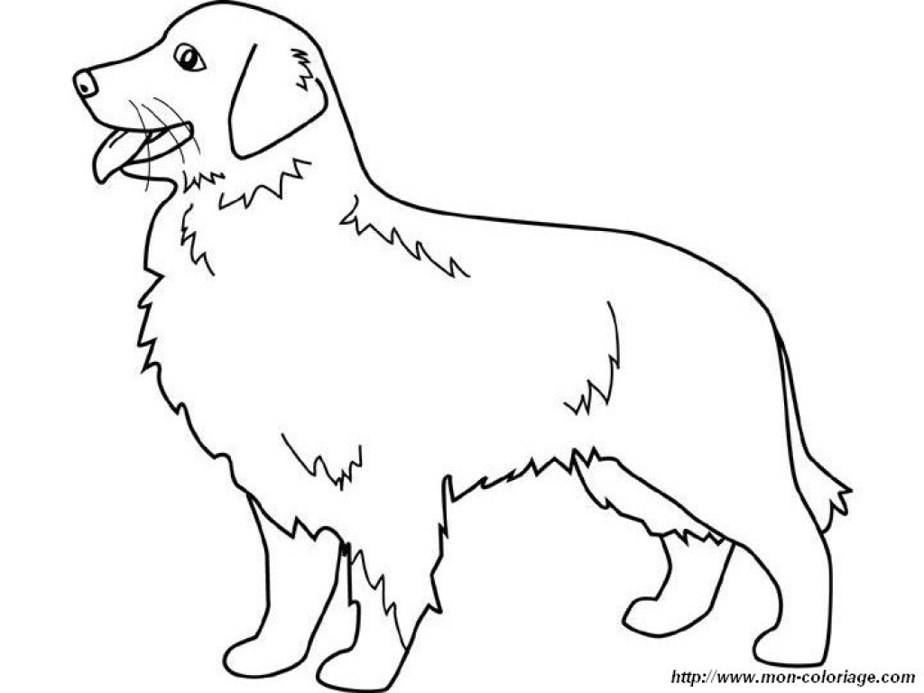 1024x768 Golden Retriever Coloring Pages