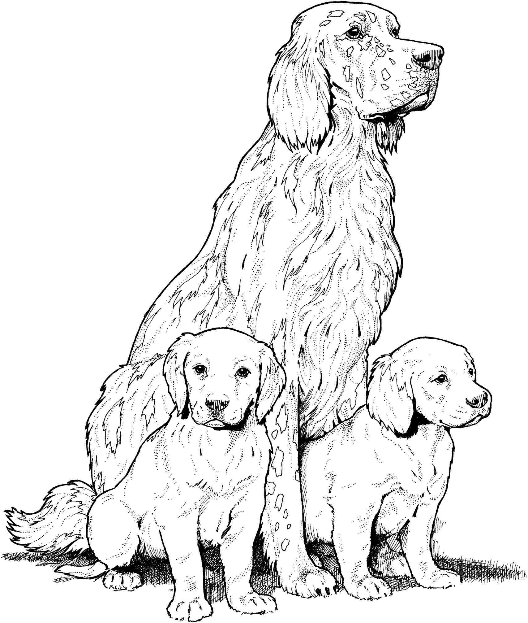 1707x2012 How To Draw A Golden Retriever Step By Step For Kids