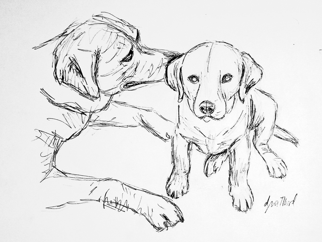 1024x769 Cooper And Ginger Pencil Drawing Of 2 Golden Retrievers