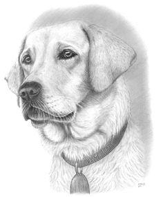 236x286 Golden Retriever Art Print Of Drawing 8x10 Golden Dog Art Dogs