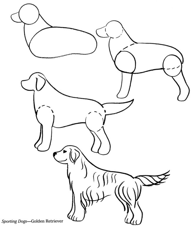 650x770 How To Draw Pets Drawing Tutorials Cats And Dogs