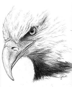 236x286 How To Draw A Eagle Bald Eagle By Highdarktemplar Traditional