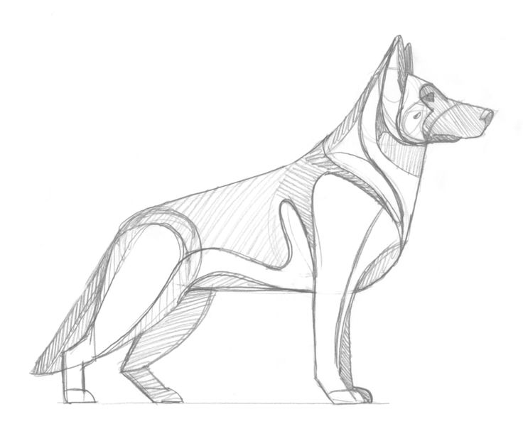 736x621 German Shepherd Sketch By Dkng German Shepherd Dog Logo