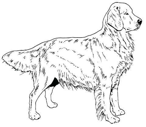 480x416 Golden Retriever Coloring Pages Hand Drawn Dog With Ethnic Floral
