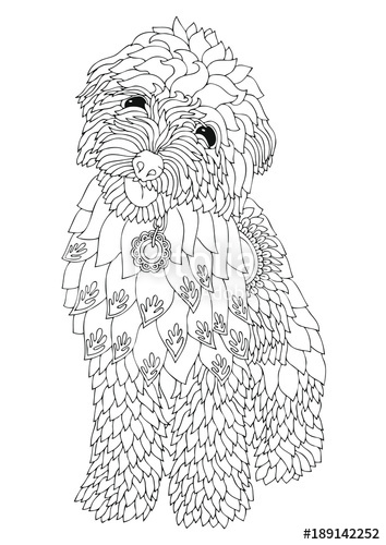 354x500 Golden Doodle. Hand Drawn Dog. Sketch For Anti Stress Adult