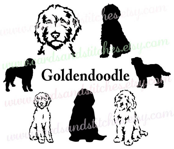 570x488 Goldendoodle Svg Dog Silhouettes Dogs Svg Digital