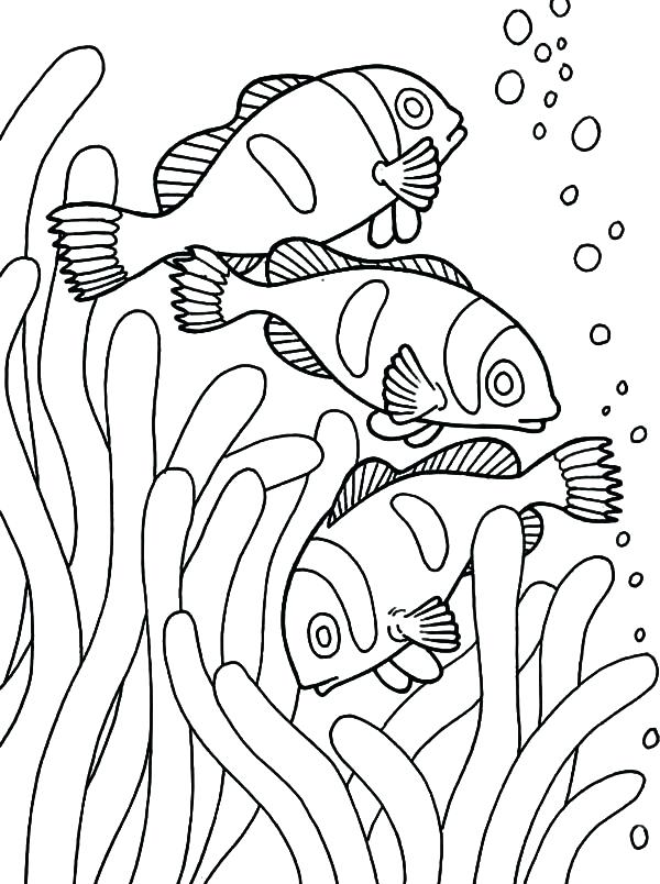 600x804 Goldfish Coloring Page Fish Coloring Pages For Preschool Goldfish