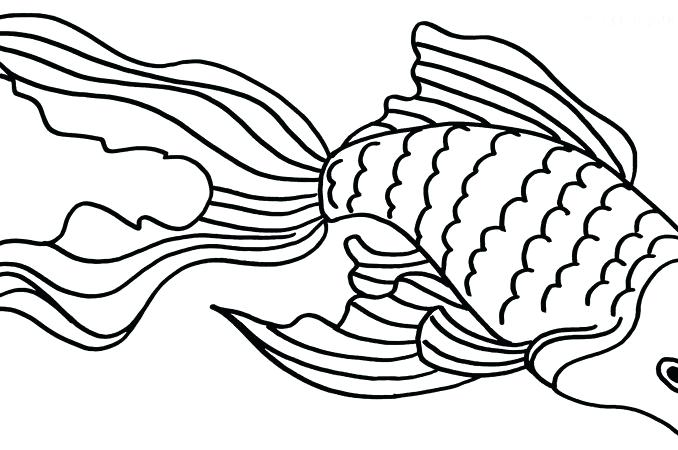 678x450 Goldfish Coloring Page