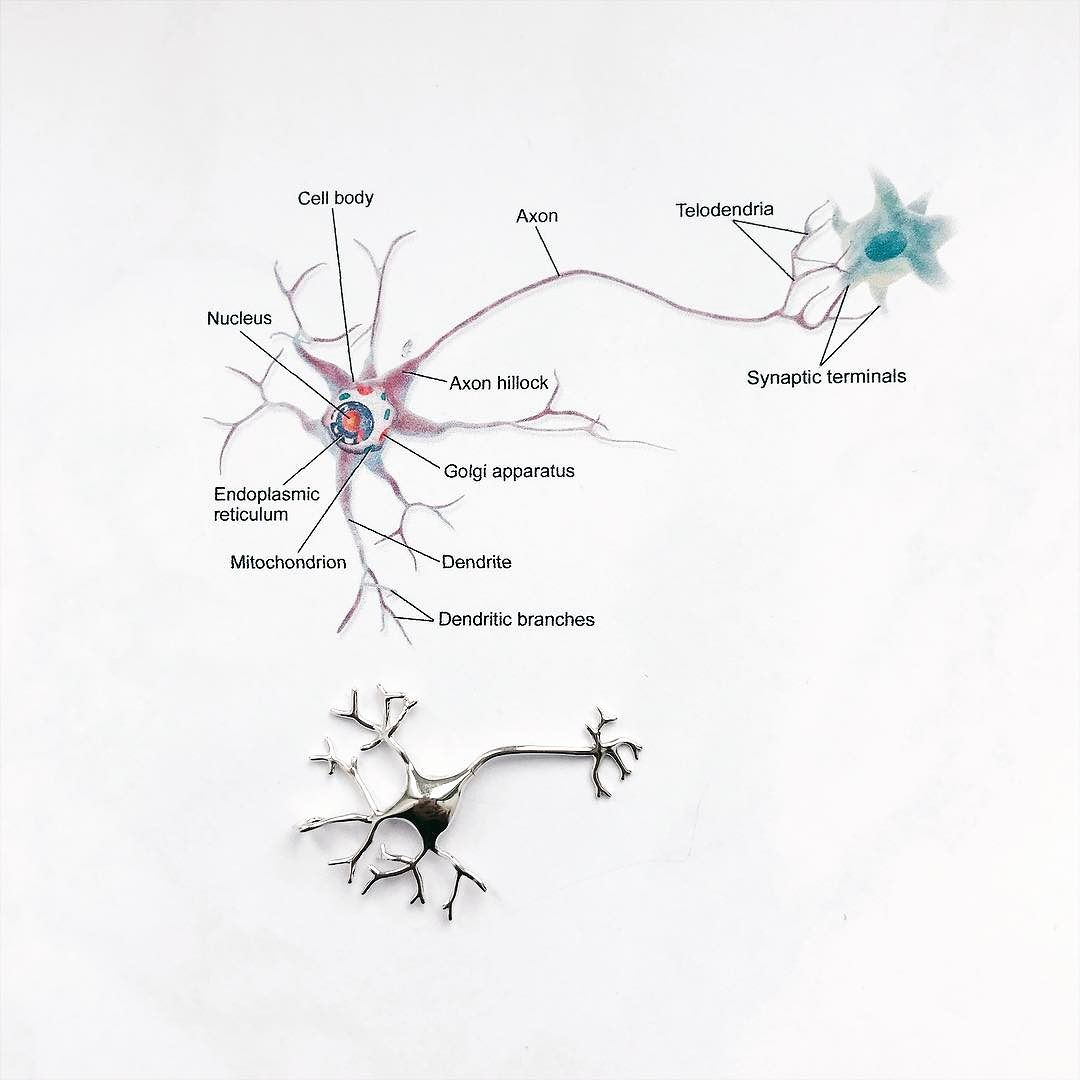 1080x1080 Our Beautiful Neuron Is Back In Stock! ) Remember You Can Still