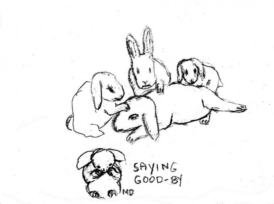 900x670 Good By Bunny. Nature. Drawings. Pictures. Drawings Ideas For Kids