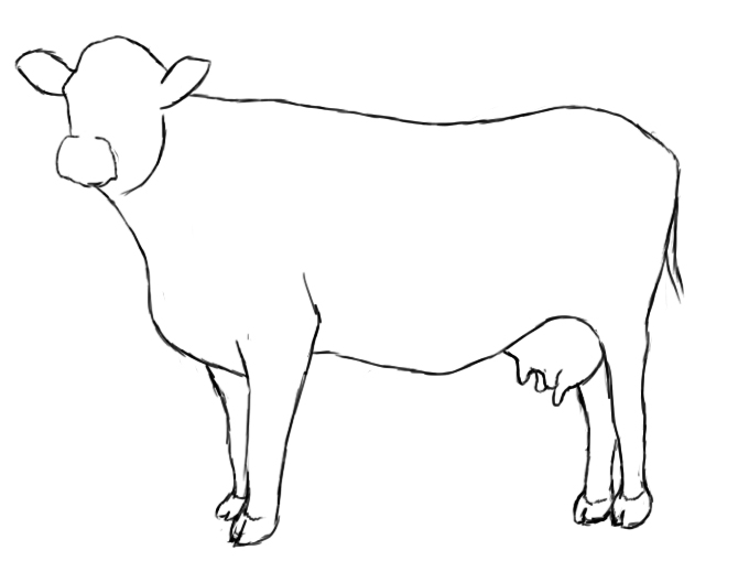 680x509 How To Draw A Cow Cow, Paper Drawing And Pencil Eraser