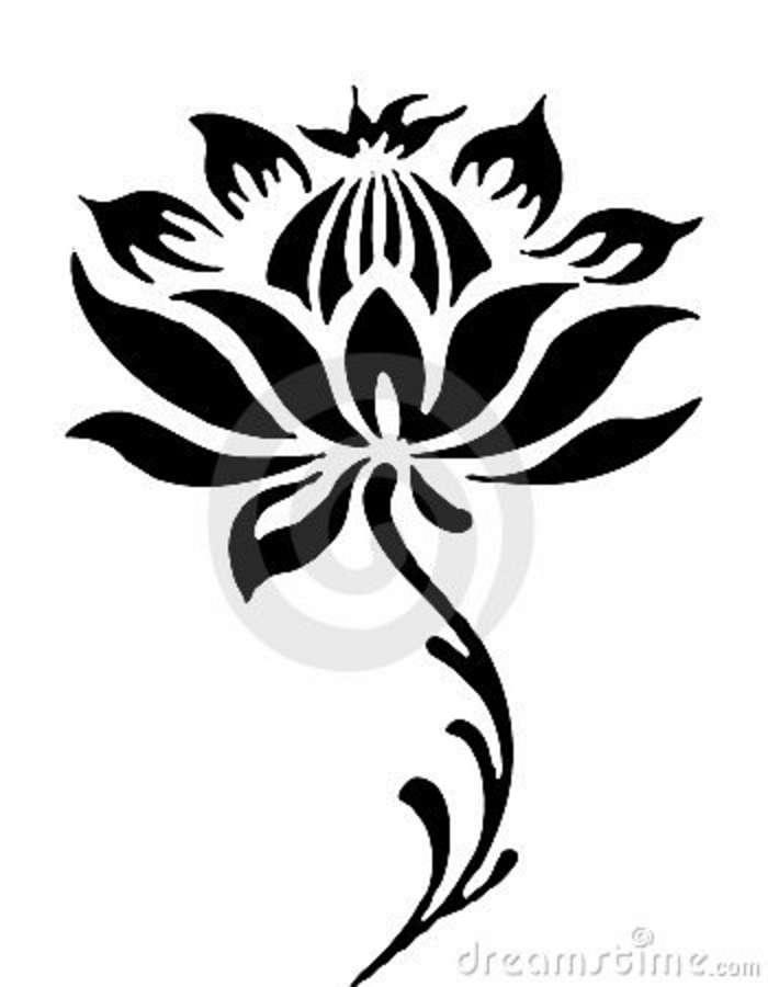 700x900 The Best Flower Line Drawings Ideas On Flower