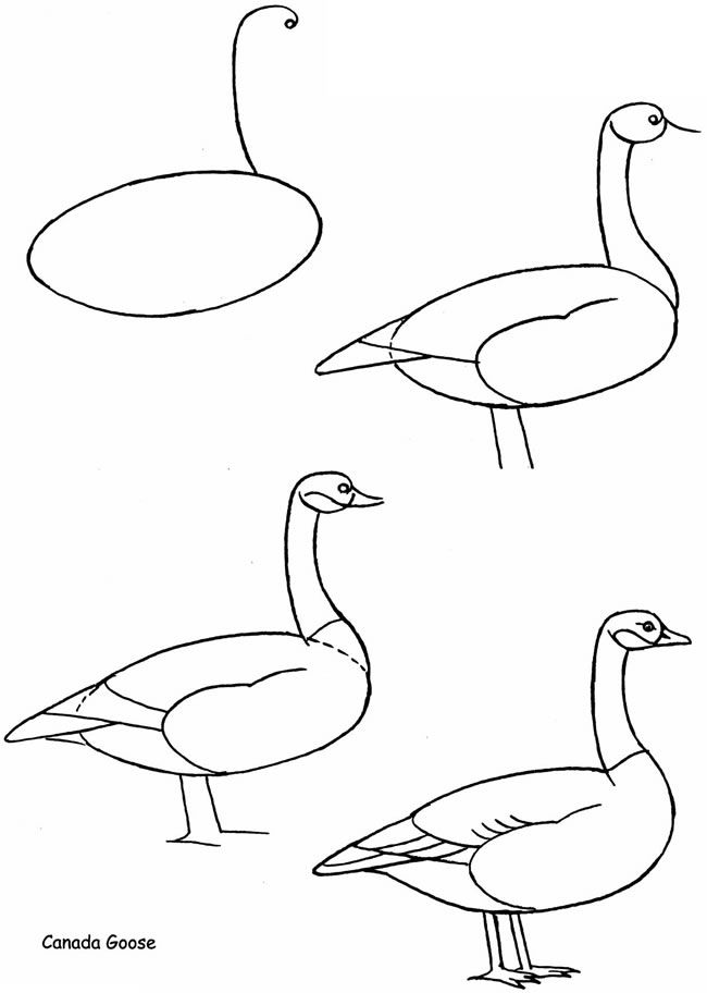 650x912 How To Draw Birds Dover Publications Samples