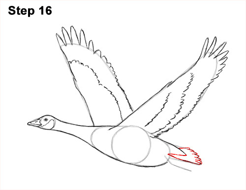 500x386 How To Draw A Canada Goose