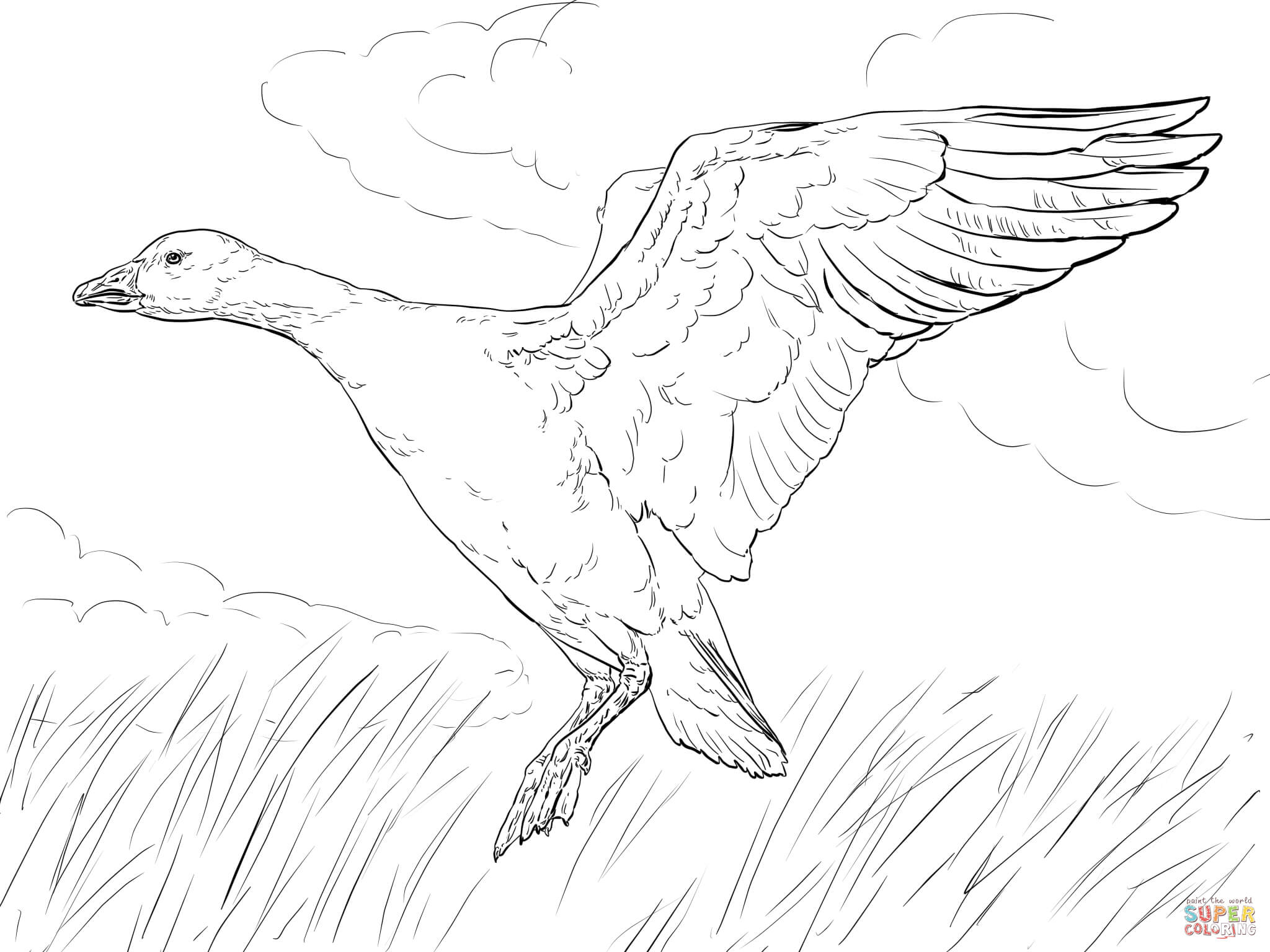 2048x1536 Landing Snow Goose Coloring Page Free Printable Coloring Pages