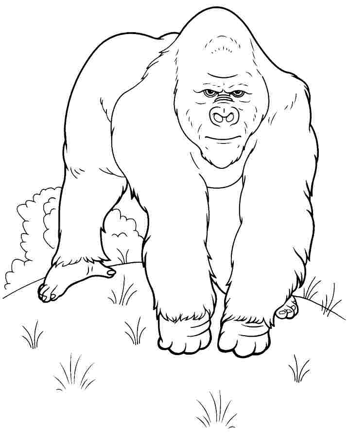 Gorilla Drawing For Kids at GetDrawingscom Free for personal use
