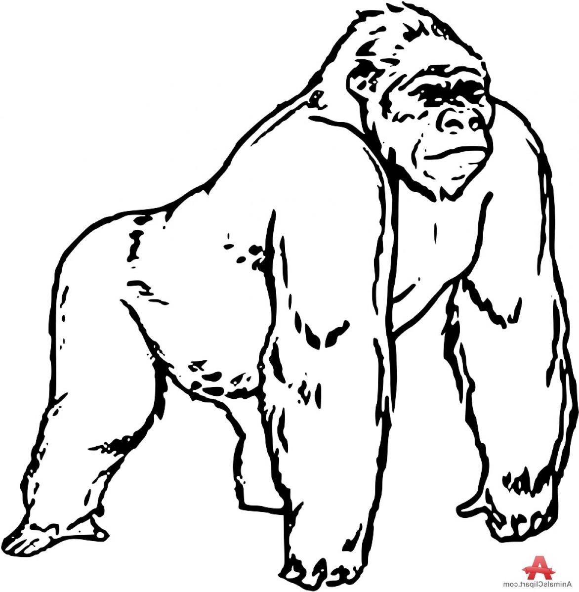 1172x1198 Gorilla Clipart Black And White