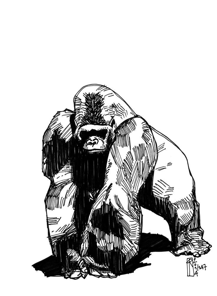736x1007 Gorilla Illustration In Tattoo Stuff I Like Tattoo