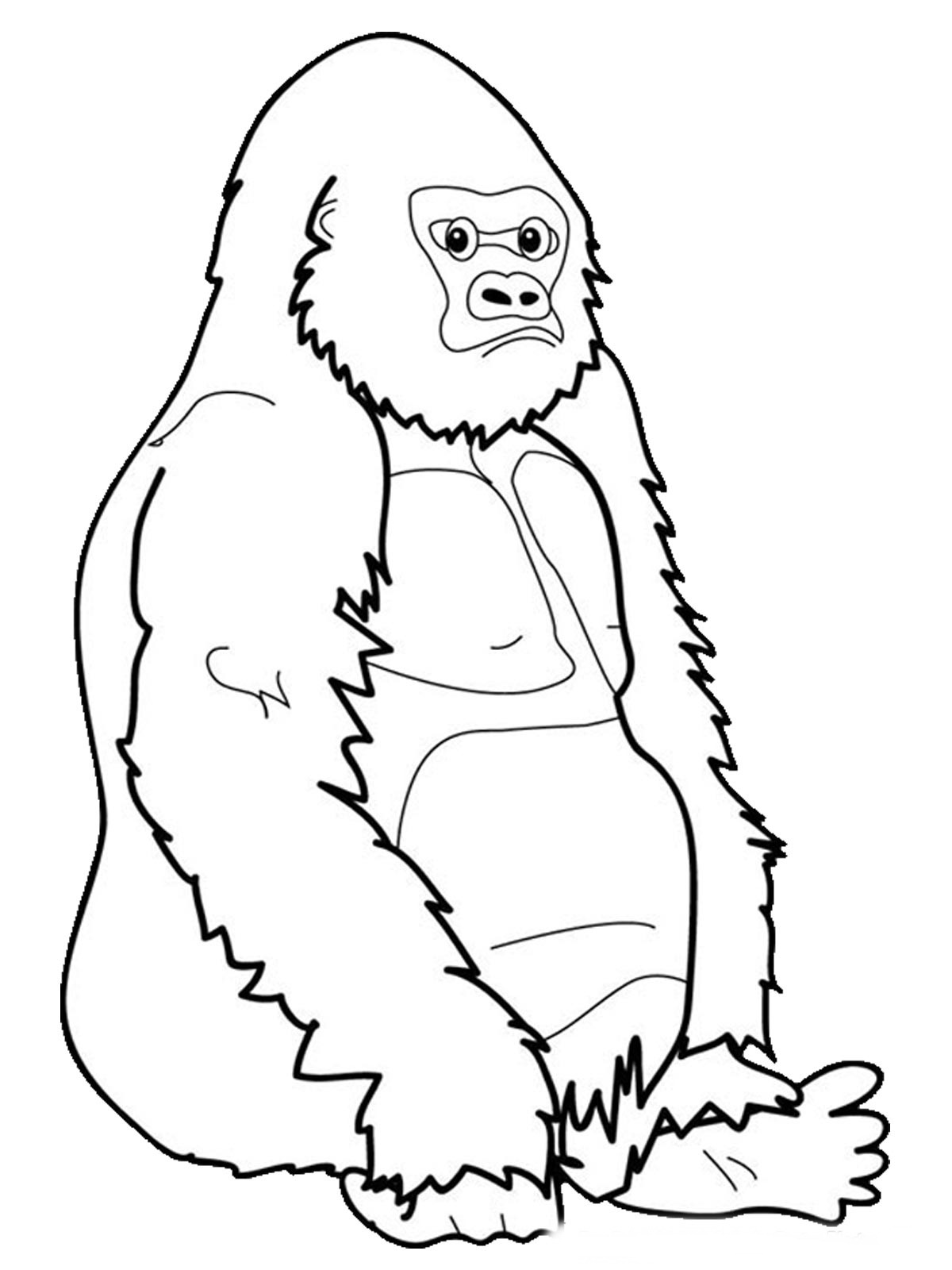 1200x1600 Realistic Gorilla Coloring Pages Turtle