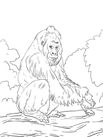 360x480 Western Lowland Gorilla Coloring Page Free Printable Pages