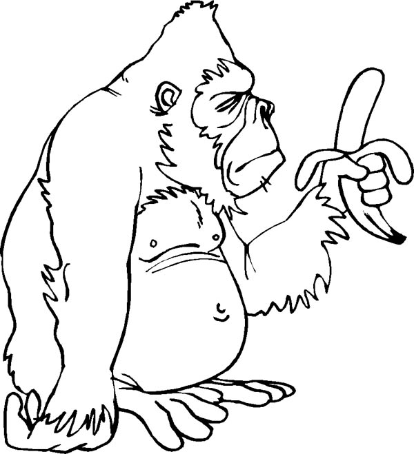 Gorilla Line Drawing at GetDrawings.com | Free for personal use ...