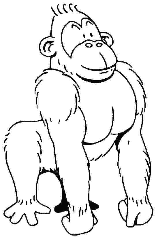541x830 Coloring Page Gorilla Animals Printable Pages Drawing