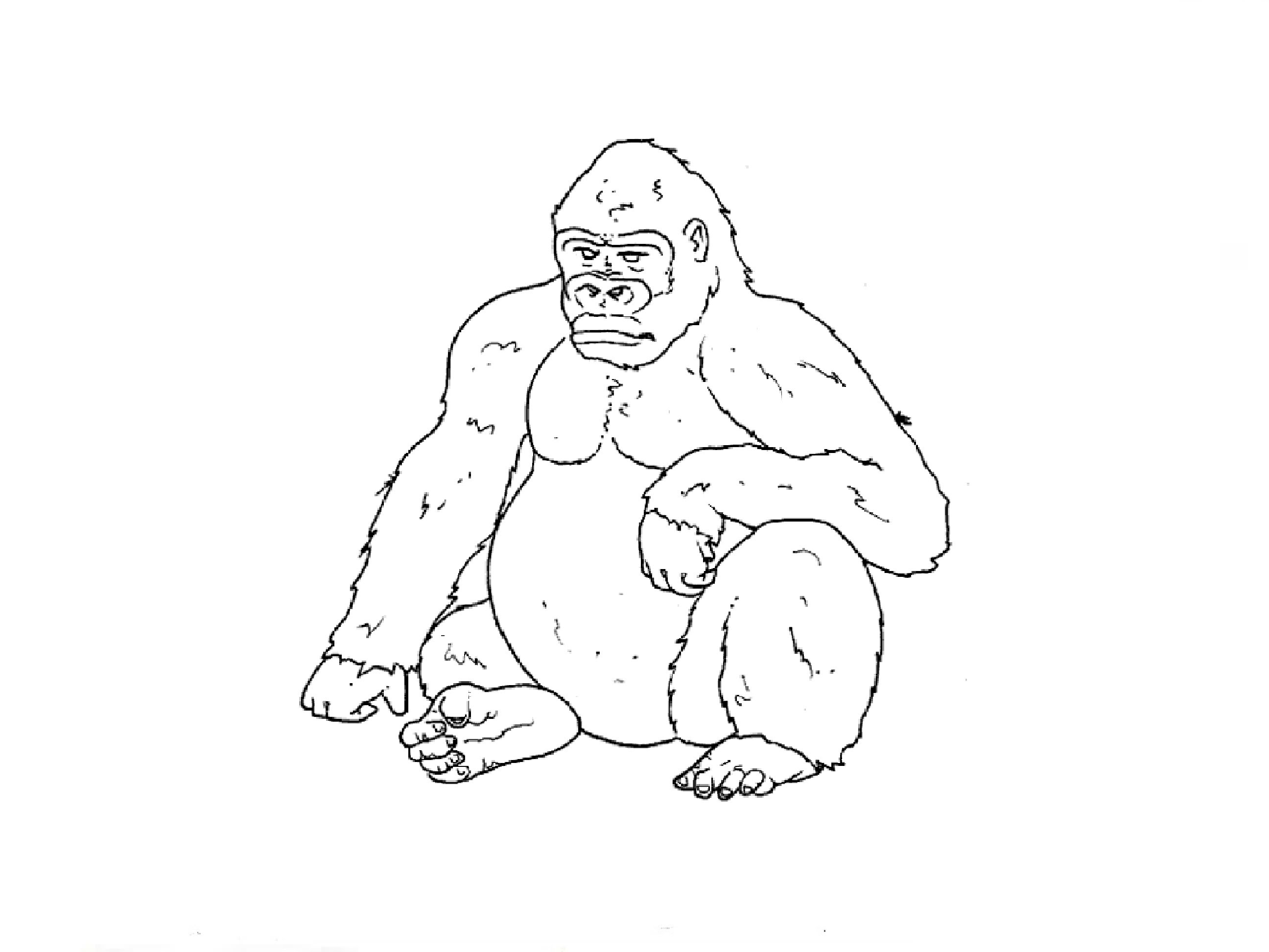 2592x1944 Drawing Of A Gorilla
