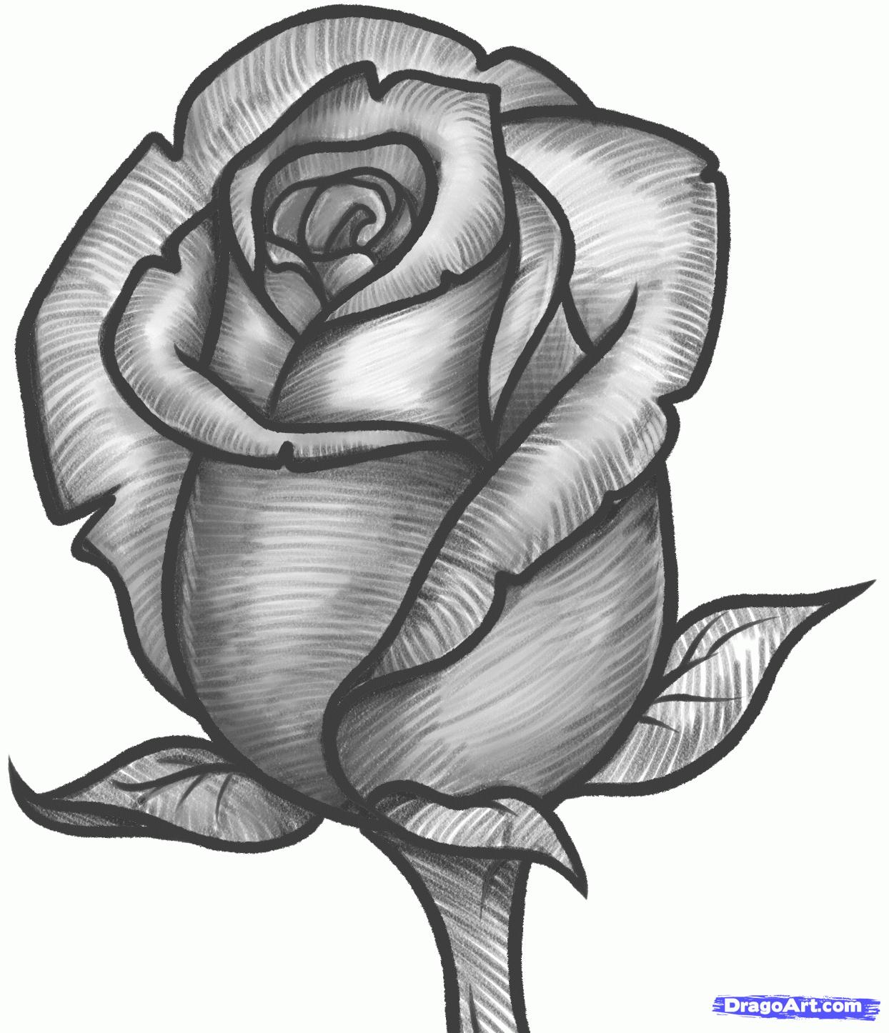 1244x1446 Graffiti Drawings Of Roses Rose Drawings Rose Pencil Drawing By