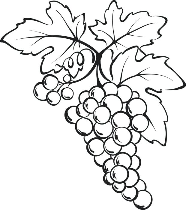 620x700 Grapes Coloring Pages Pictures Of Grape Leaves