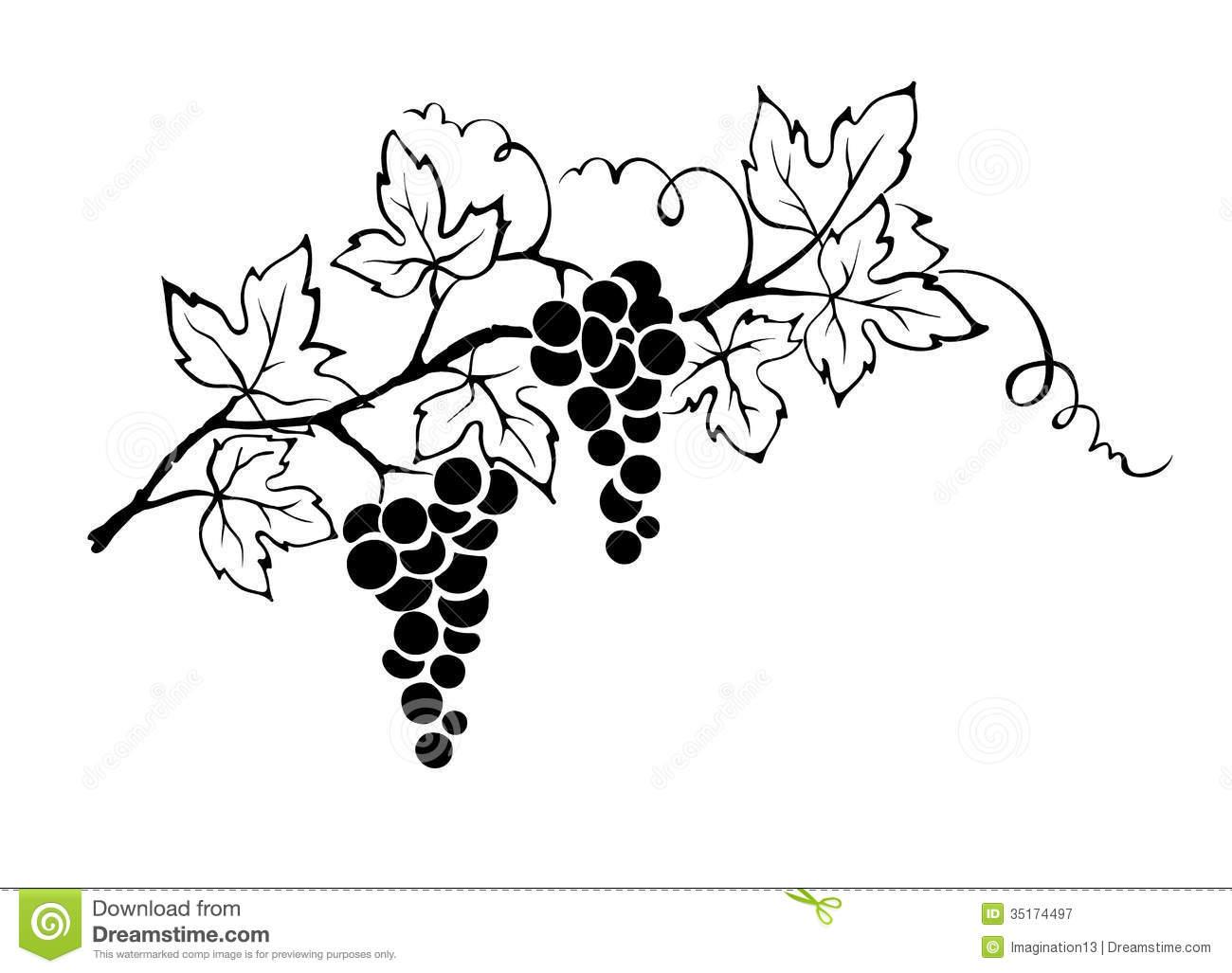 1300x1027 Grape Plant Clipart