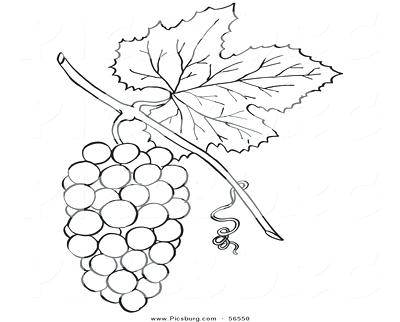 400x322 Grapes Coloring Pages Download Page