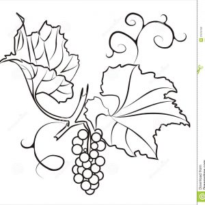 300x300 Bunch Of Grapes Sketch Vector Bunch Adult