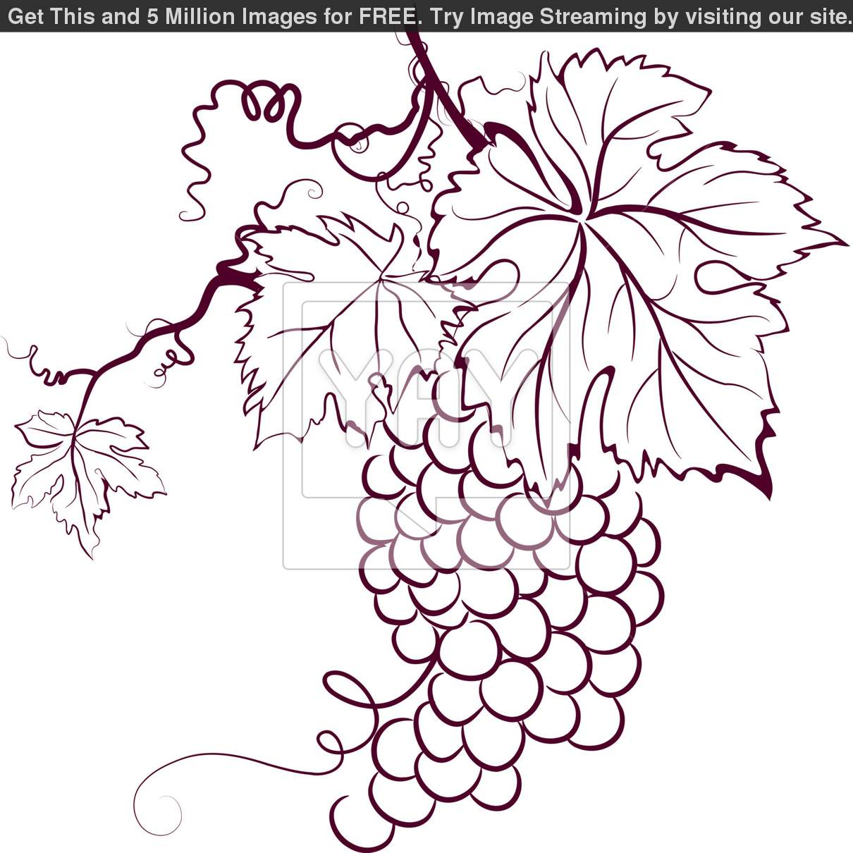 Grape Leaves Drawing At Getdrawings Free Download