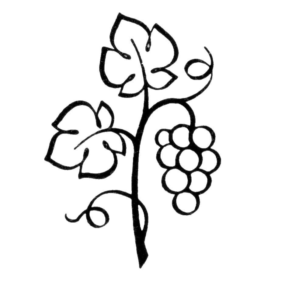 grape vines drawing at getdrawings com free for personal use grape rh getdrawings com grape vine design clipart grape vine clip art images