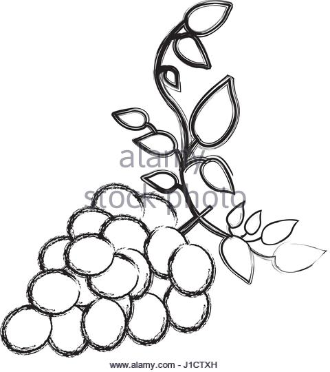 Grapes Drawing