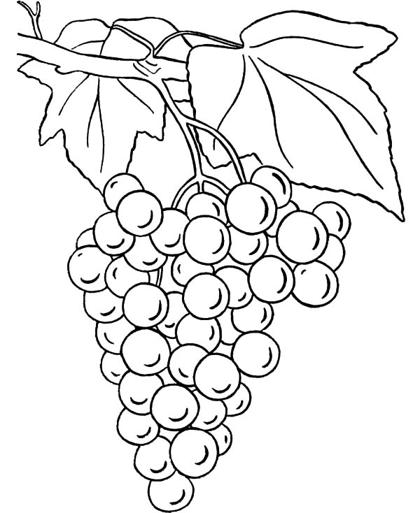 600x734 Grapes Coloring Page