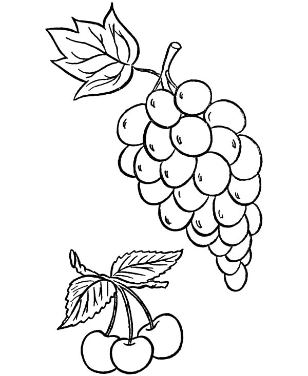 600x734 How To Draw Grapes Coloring Pages Color Luna