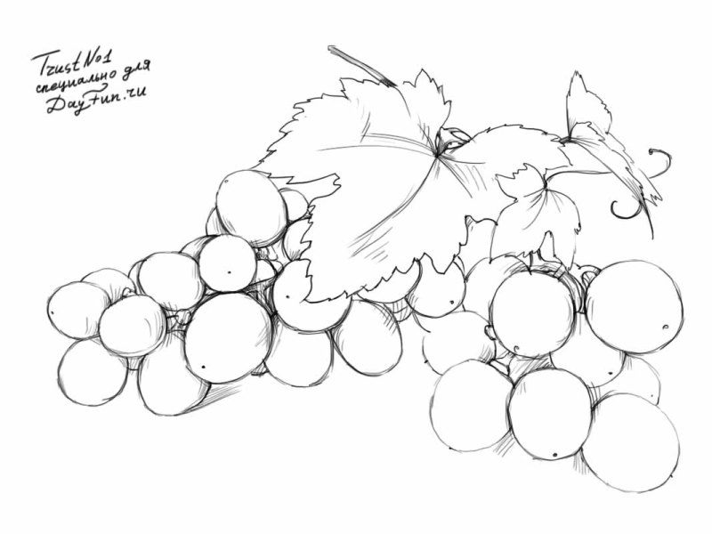 800x600 How To Draw Grapes Step By Step
