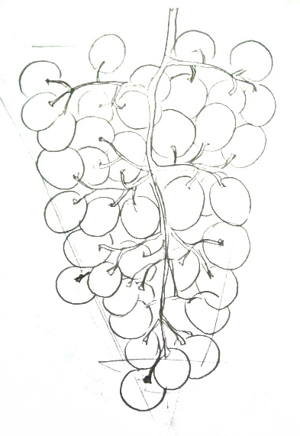 300x436 How To Draw Grapes Step By Step