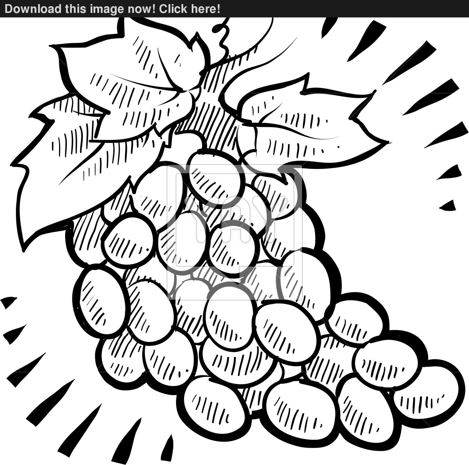 1600x1584 Bunch Of Grapes Sketch Vector