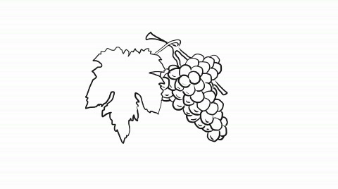 480x268 Stock Video Drawing Of A Grapes, Hd ~