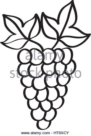 300x447 Grapes Fresh Fruit Drawing Icon Stock Vector Art Amp Illustration