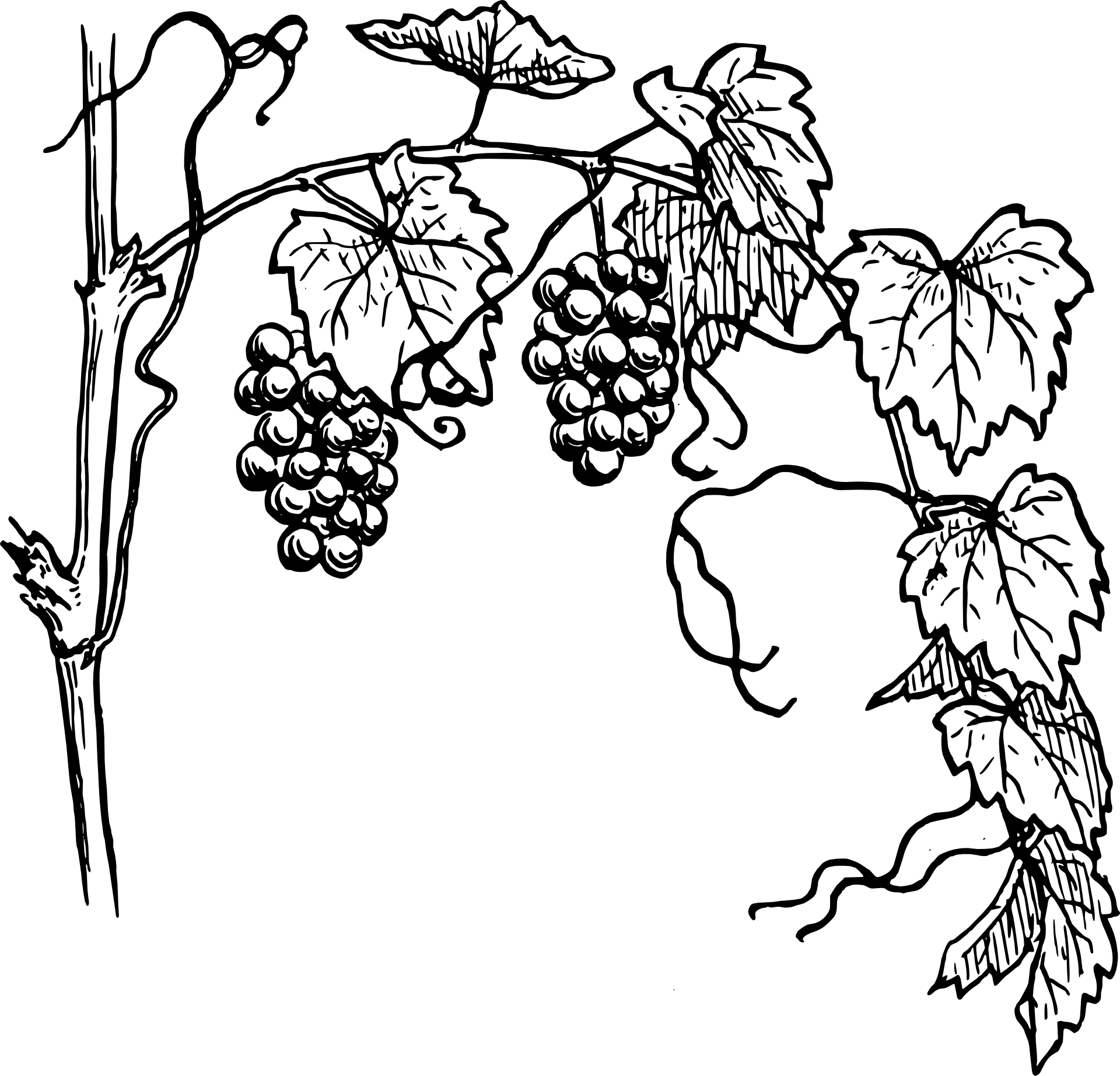 1920x1844 Drawing Amp Sketch, Grapes,fruit Vector Free Psd,vector,icons