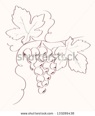 384x470 Drawn Grapes Simple
