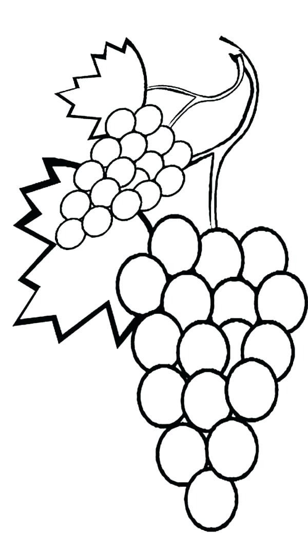 600x1038 Grapes Coloring Pages Coloring Pages A A Stalk Of Grapes Coloring