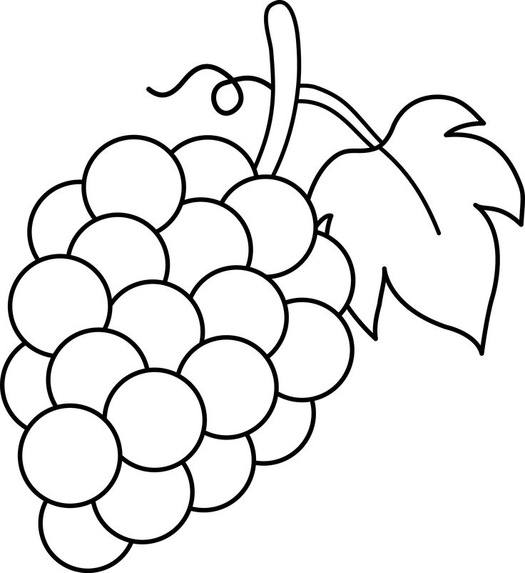 736x802 Grapes Clipart Line Drawing
