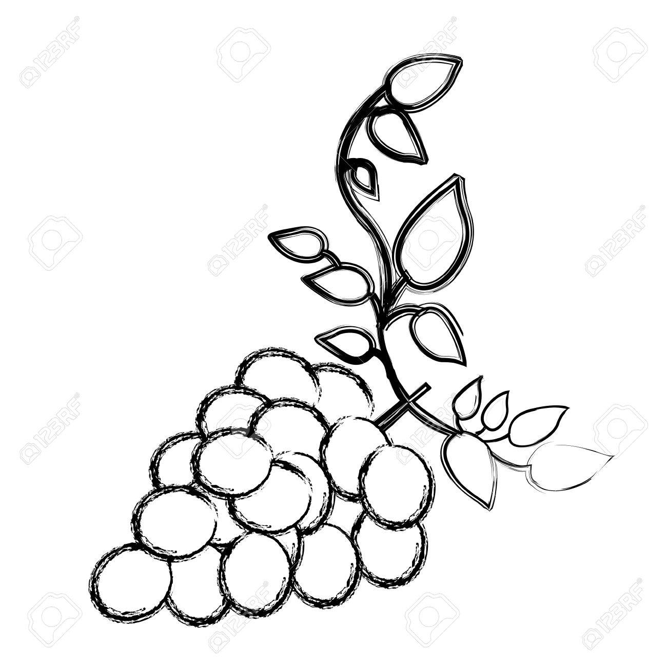 1300x1300 Monochrome Sketch Silhouette Of Bunch Of Grapes With Branch