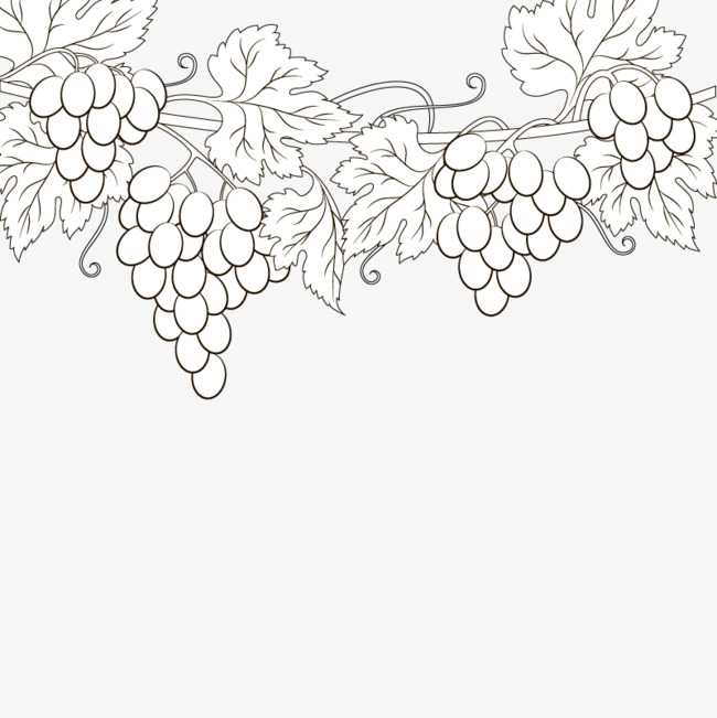 650x651 Vector Sketch Of Grapes, Fruit, Hand Painted, Black And White Png