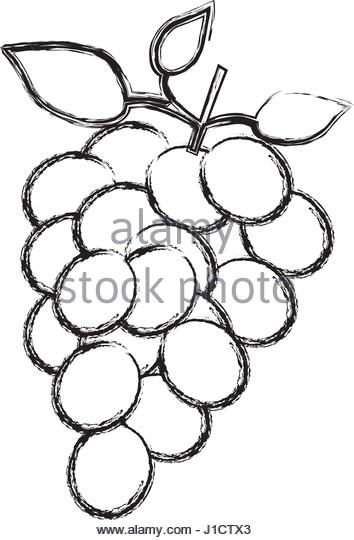354x540 Bunch Of Grapes Sketch Stock Photos Amp Bunch Of Grapes Sketch Stock